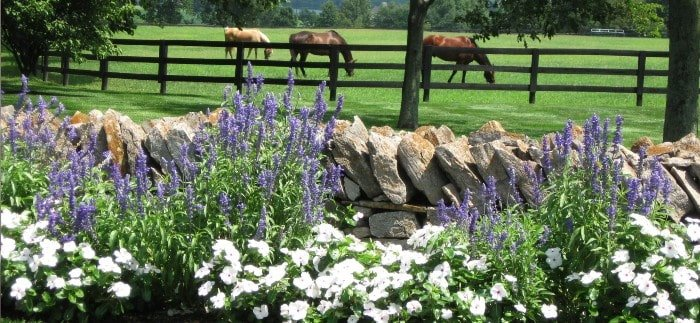 flowers on a lexington, ky horse farm